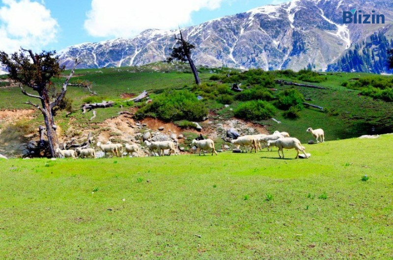 2 days 1 night islamabad to gabeen jabba standard group tour spring package