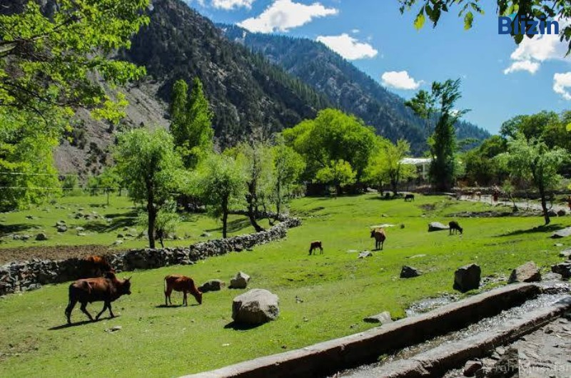 7 days 6 nights islamabad to chitral valley standard family tour spring package