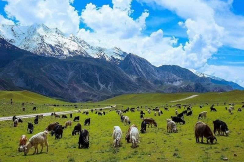 7 Days Tour to Chitral